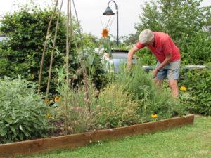 Garden Volunteer
