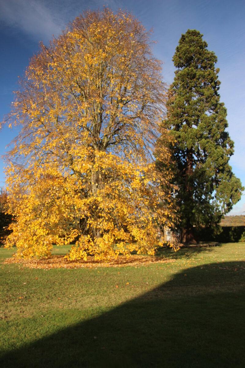 November Autumn