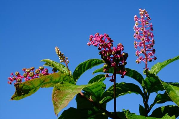 Guest blog: The wonders of medicinal plants