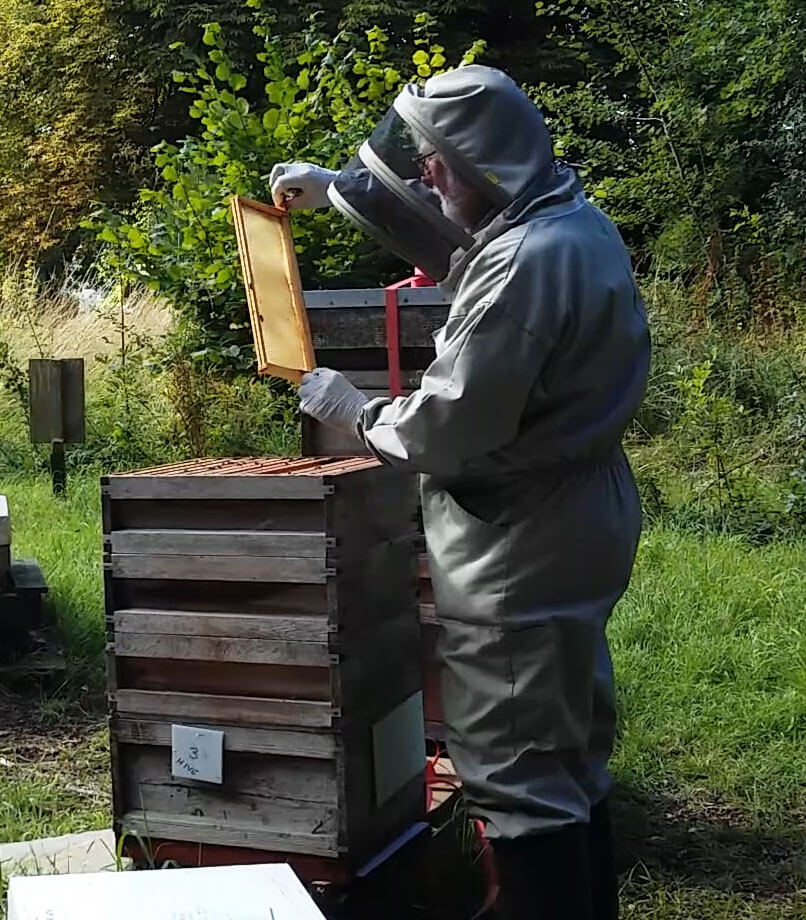 What lies ahead for our honeybees
