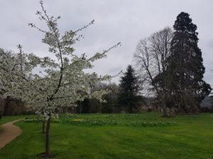 Guest Garden Blog: A spring tour of the Garden